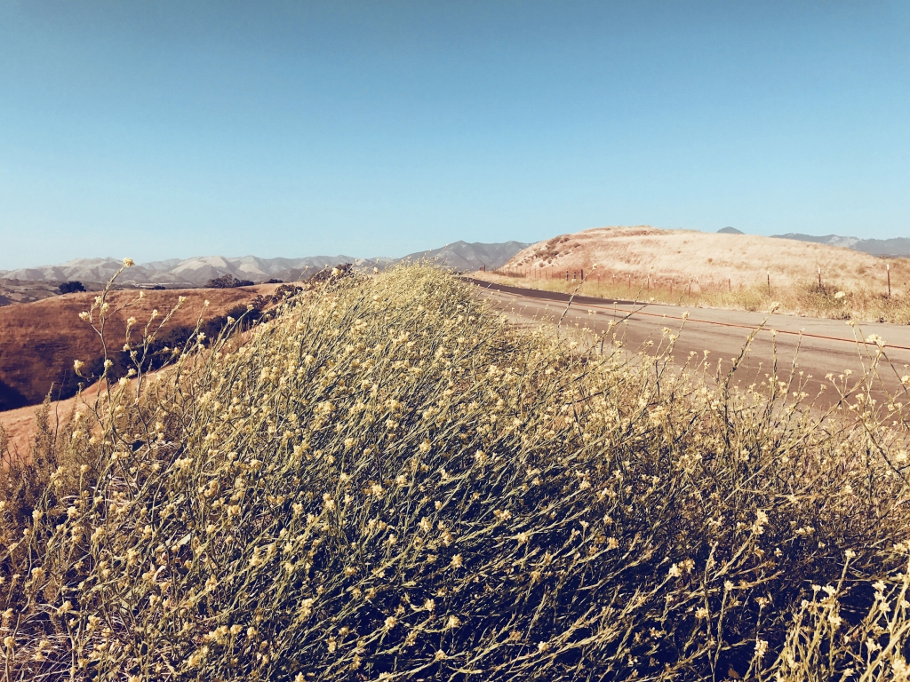 Foxen Canyon wine Trail in Los Olivos Santa Ynez California