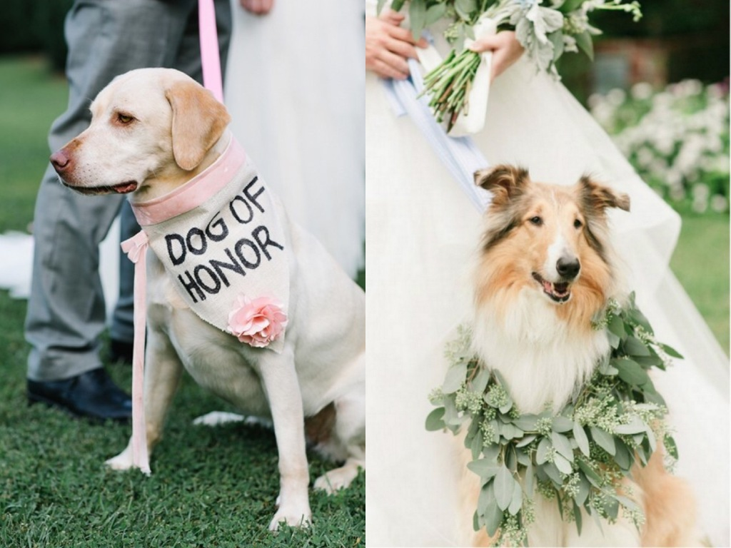 Sheltie dog wearing wedding garland wreath